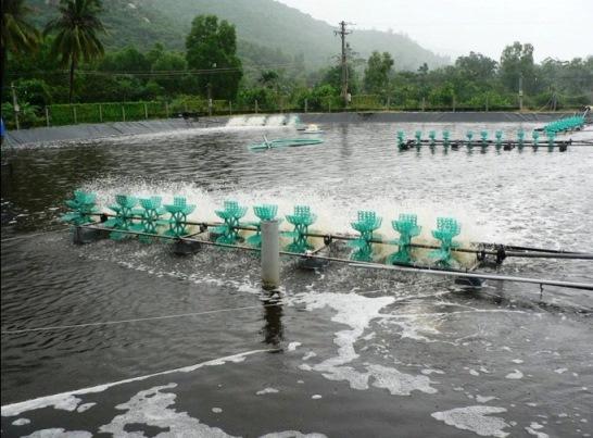 chất lượng nước ao nuôi tôm