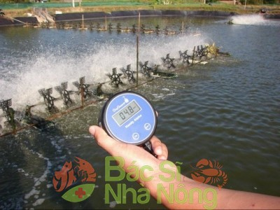 Nước ao tôm bị pH thấp, và đây là cách xử lý