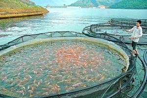 Tìm ngay giải pháp tăng sức đề kháng cho tôm cá